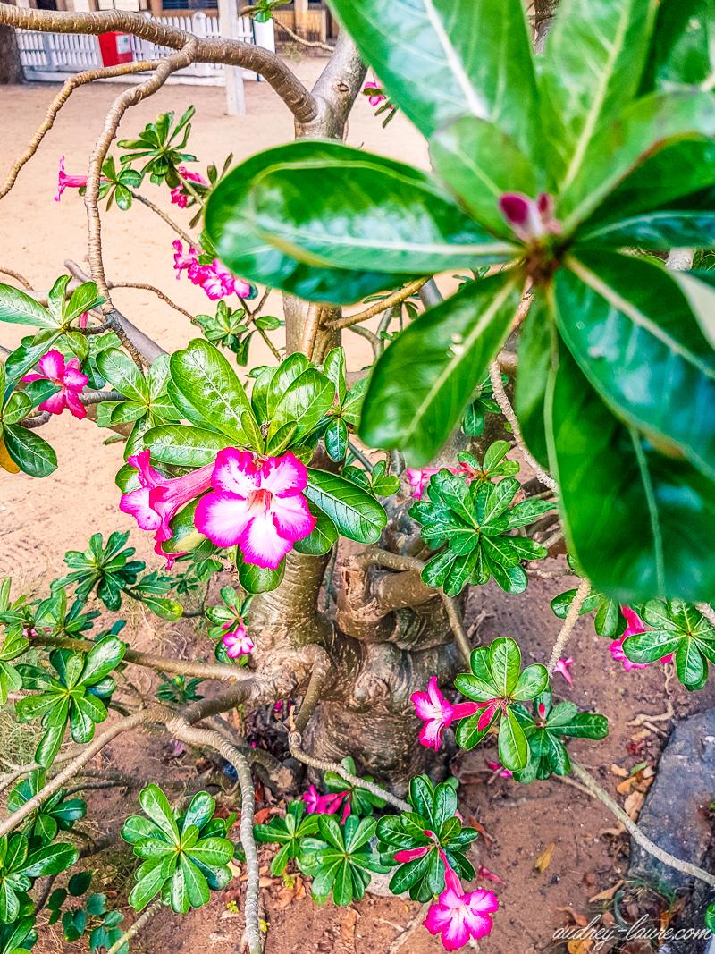 Fleurs du Sri Lanka