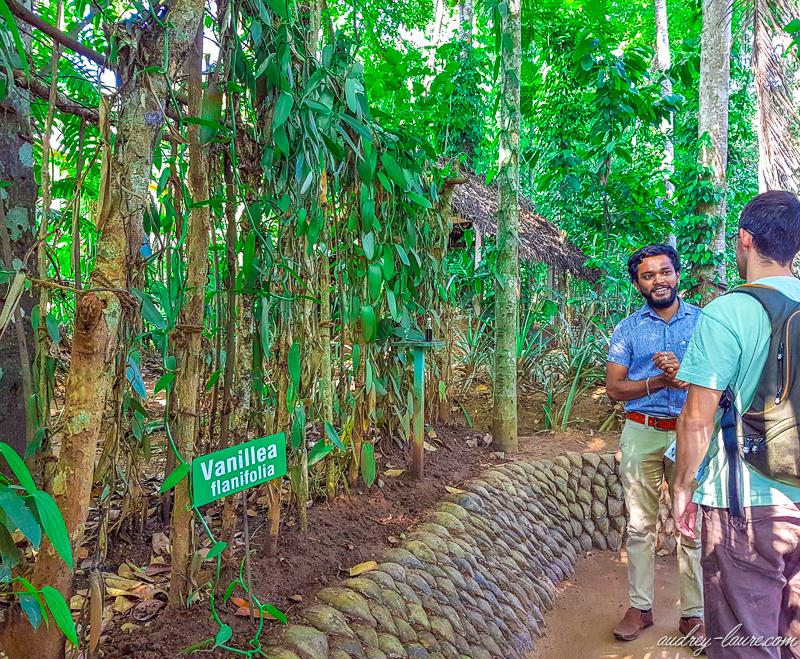 visite-jardin-épices-Sri-Lanka