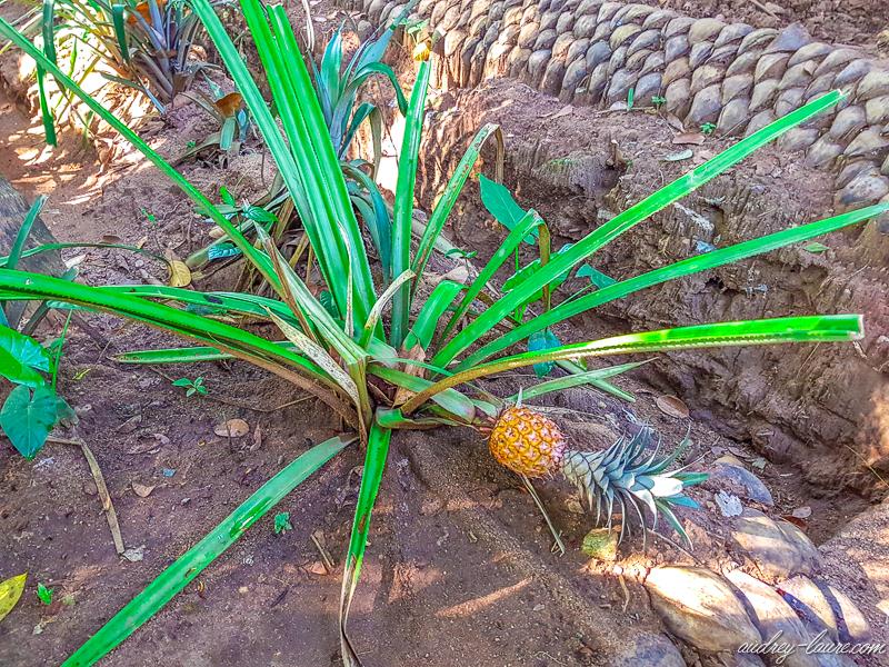 visite-jardin-ayurédique-Sri-Lanka