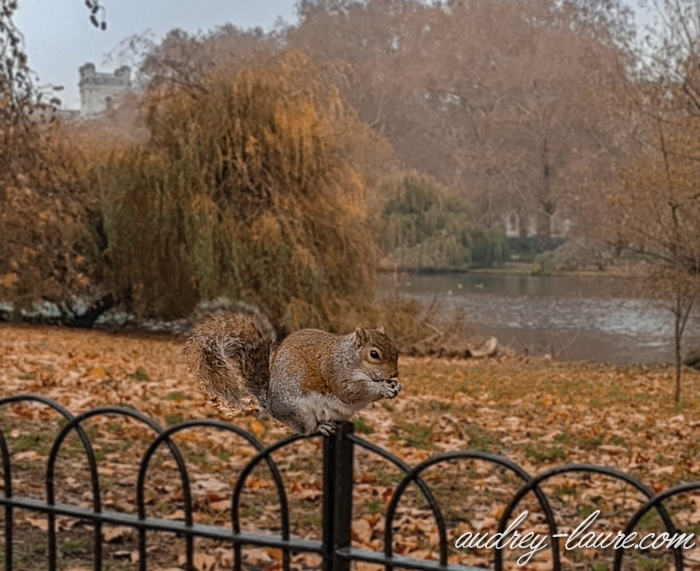Parc-Saint-James-Londres-