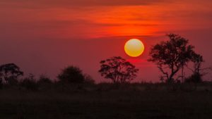 botswana-vacances